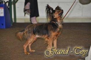Наши результаты на  81 INTERNATIONALE DOG SHOW   в Люксембурге