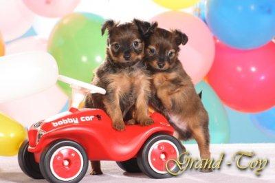 Правила безопасности для щенка,воспитание щенка