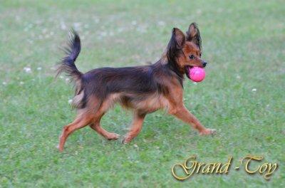 Miledi vom Grand-Toy